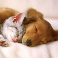 5 Puzzling Body Parts of Cats and Dogs