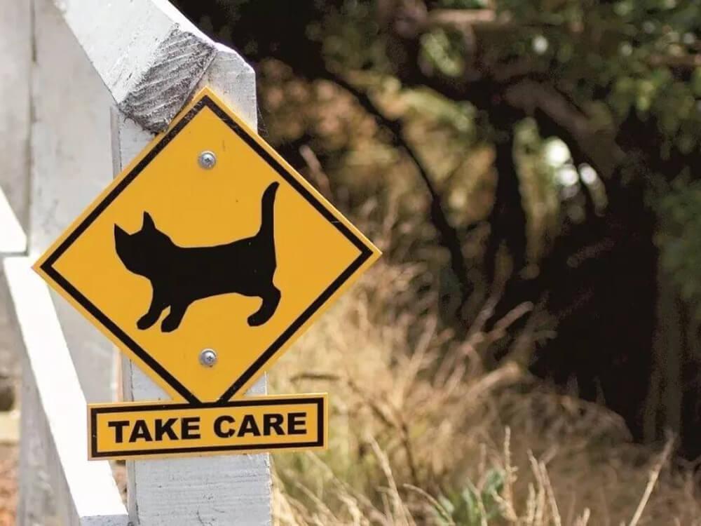 cat road warning
