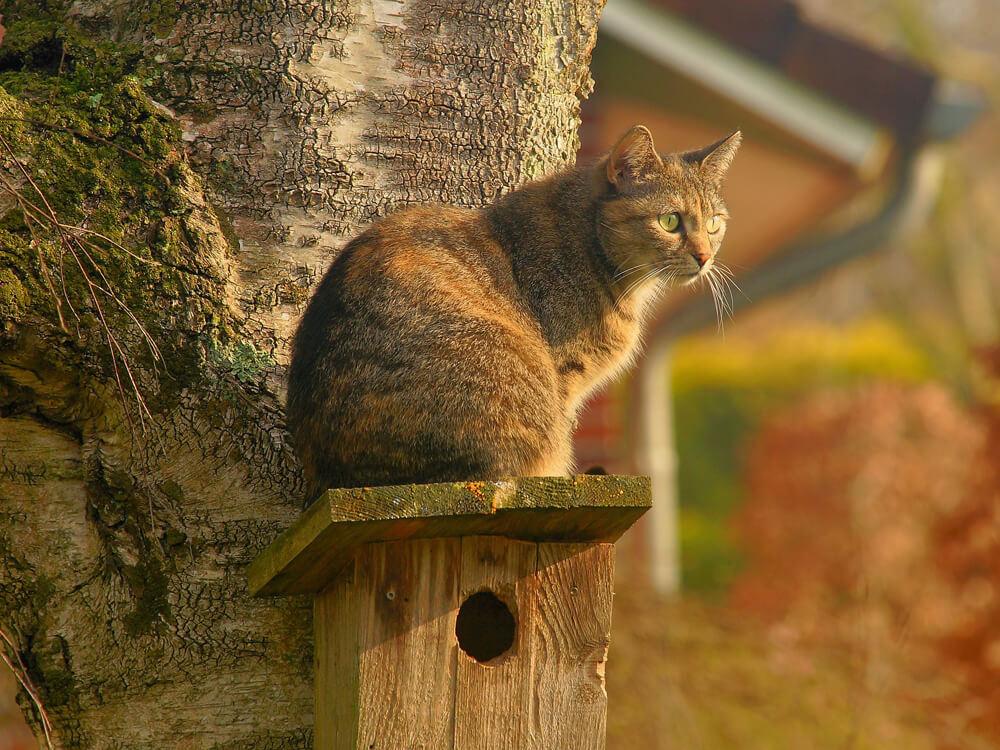 cat top on bird house