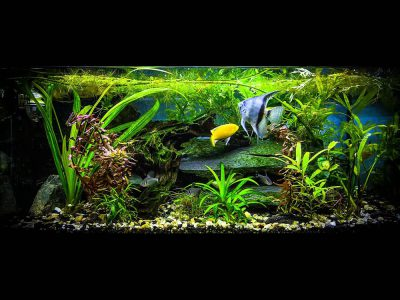 Glass vs. Acrylic Fish Tank: Choose the Best One for Your Goldfish