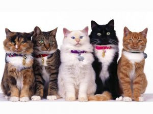 Black, White and Grey Cats: How Cat Colour Genetics Work