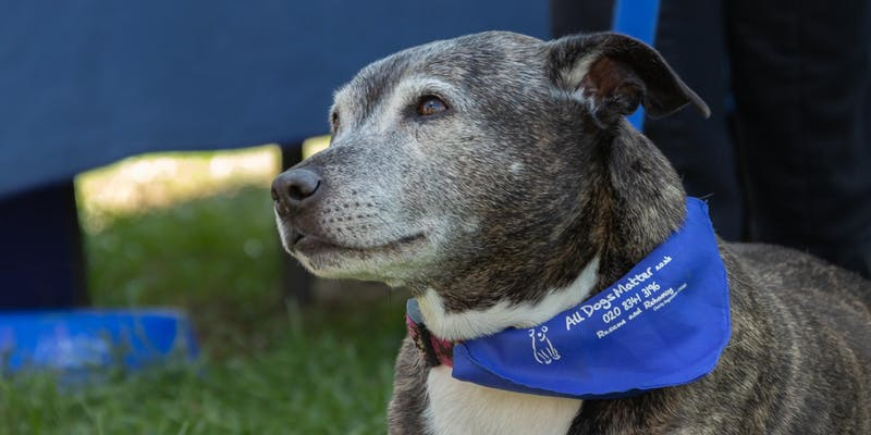 Celebrating 10 years of rescue and rehoming charity All Dogs Matter