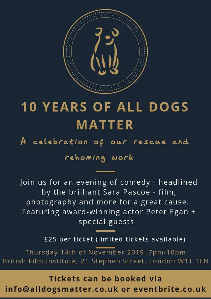 10 years of rescue and rehoming charity All Dogs Matter