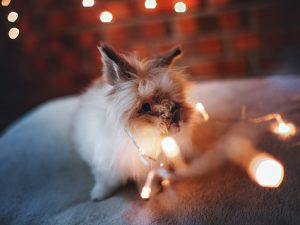 Top Tips for a Less Hare-Raising Fireworks Night