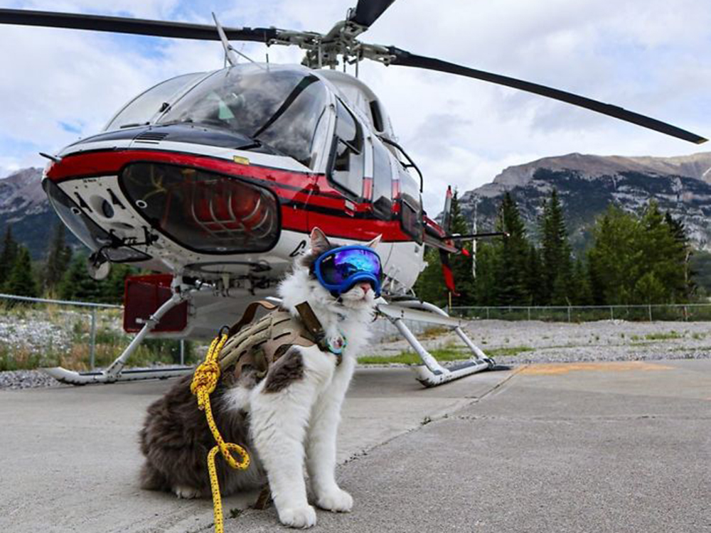 Cat-venturer