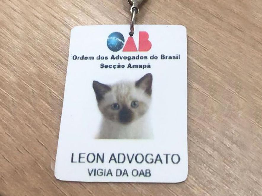 homeless cat ID
