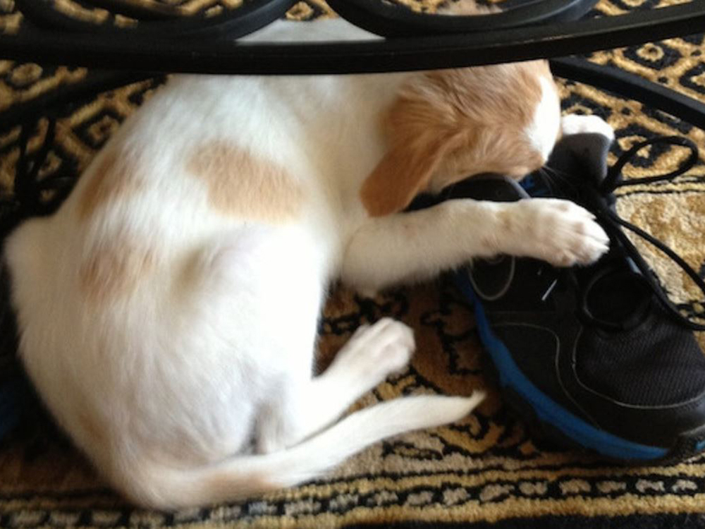 ygoa position number 14 dog sleeping in the shoe.