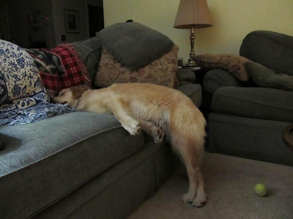 dog sleep sofa in yoga position