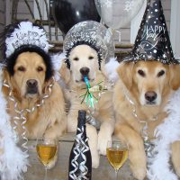 10 Cute Dogs Sending You Good Vibes This New Year