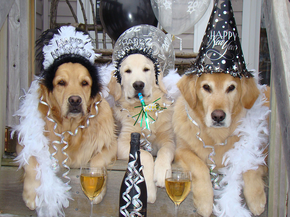 3 dogs happy new year cup