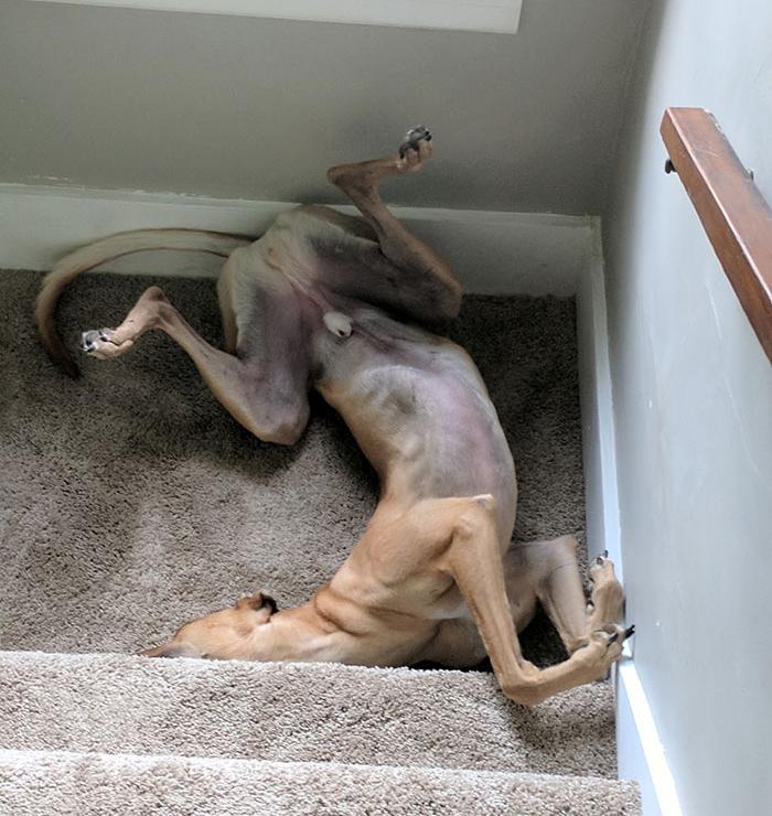 Doggy Yoga Sleep Positions 4
