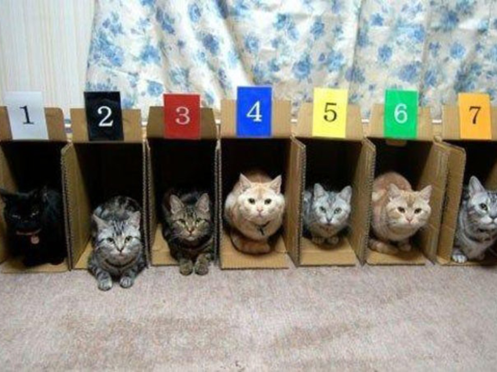 9 cats in the boxes