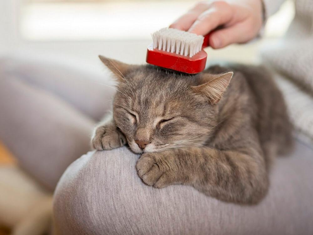 Brushing-cat-hair