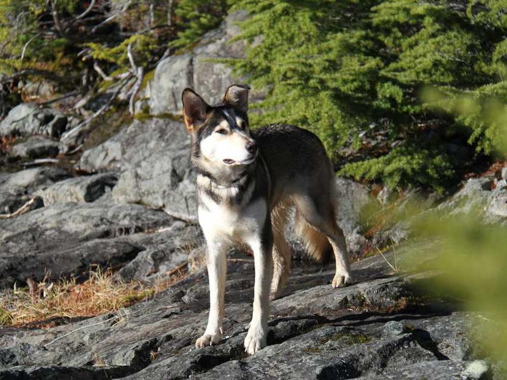 Dog Missing for 9 Days