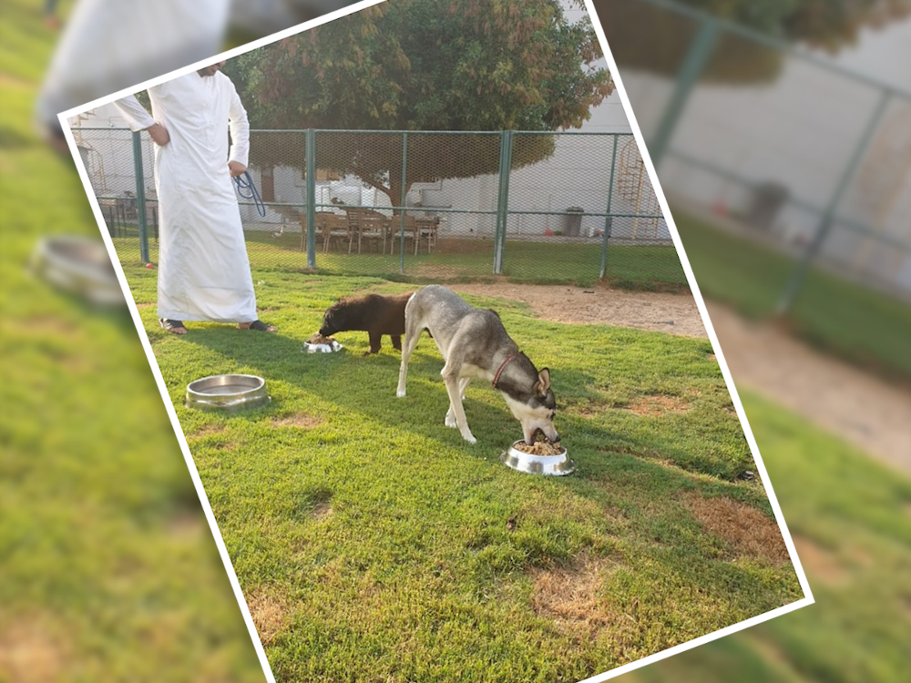 Dog eating leftovers from UAE luxury hotel