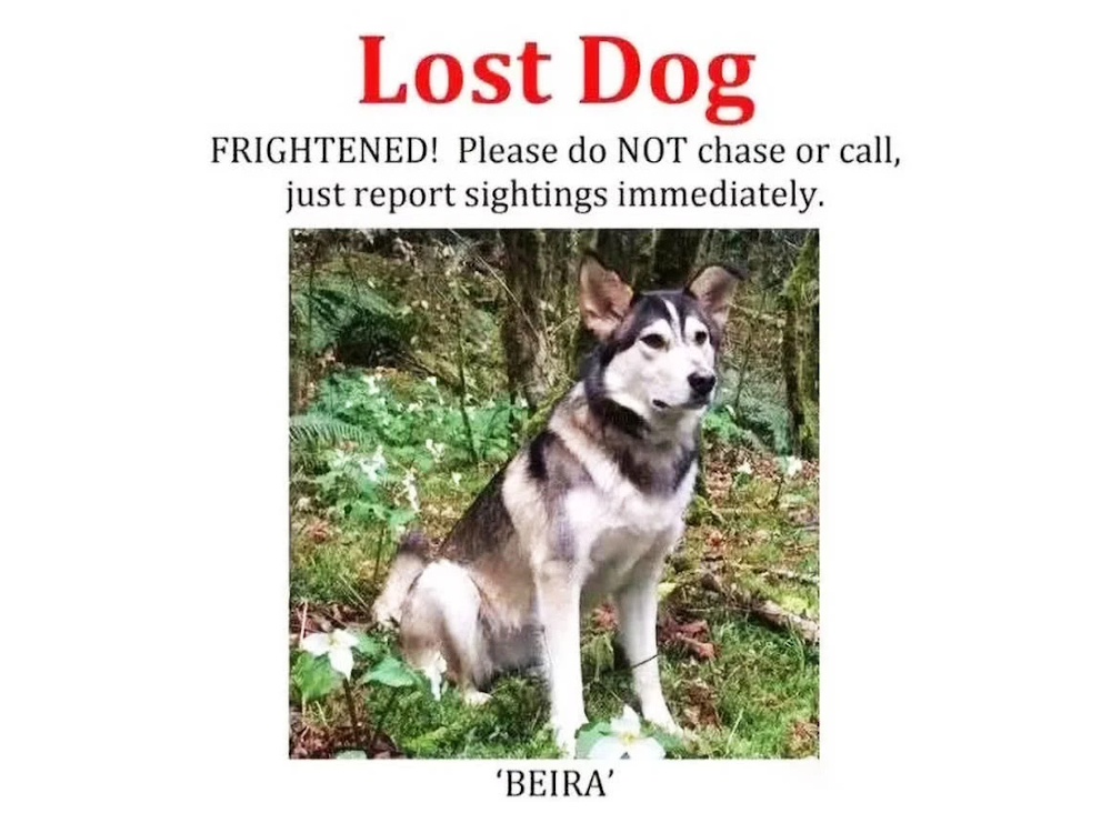 Lost dog Beira