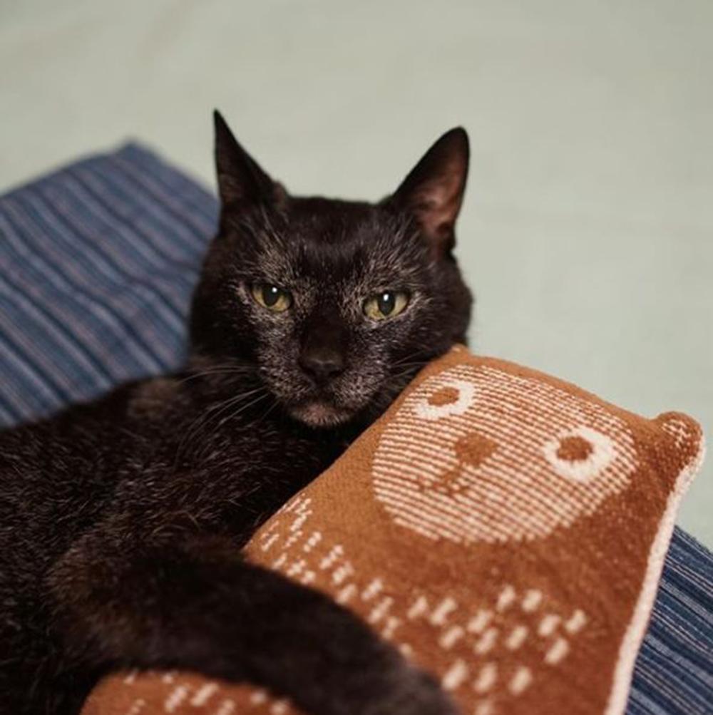 Noro favourite blanket