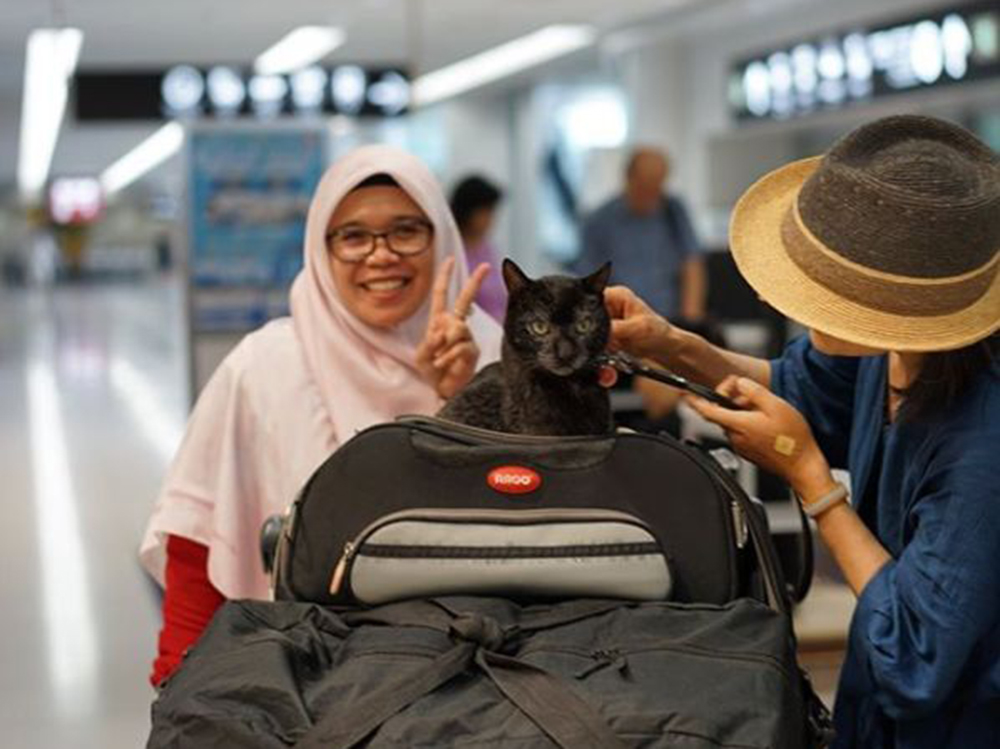 Meet the Adventurous Cat that Has Travelled 37 Countries