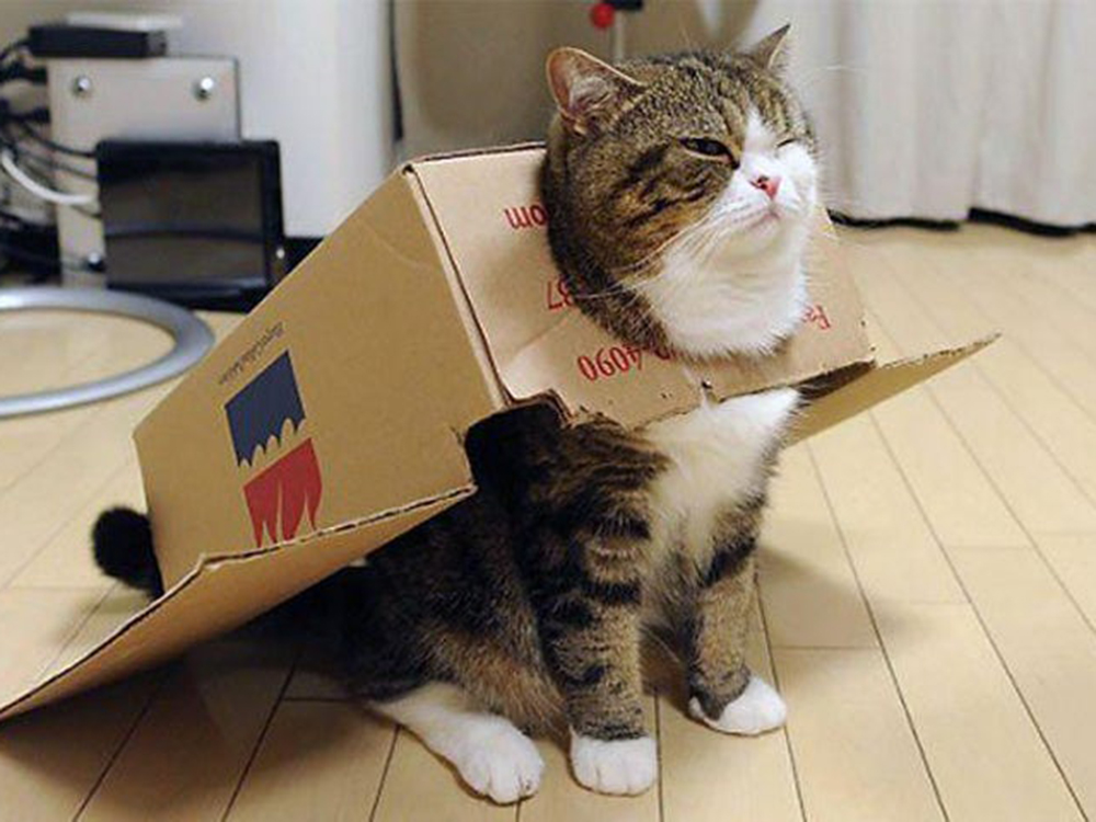 25 Adorable Cats Wishing You A Delightful Boxing Day