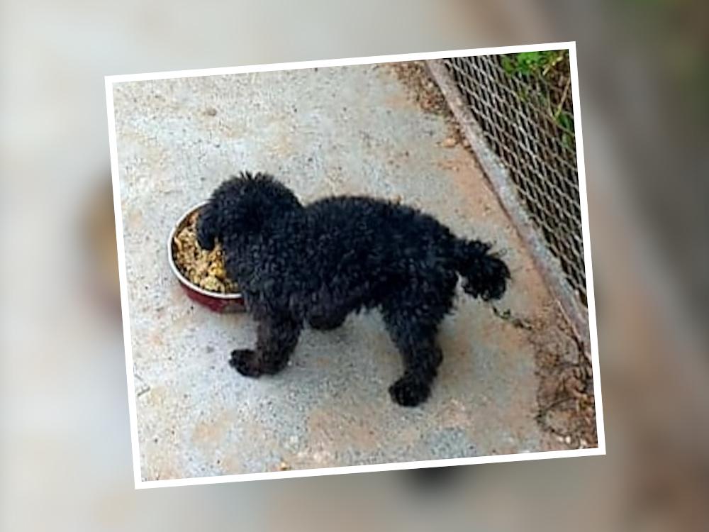 black dog eat leftovers