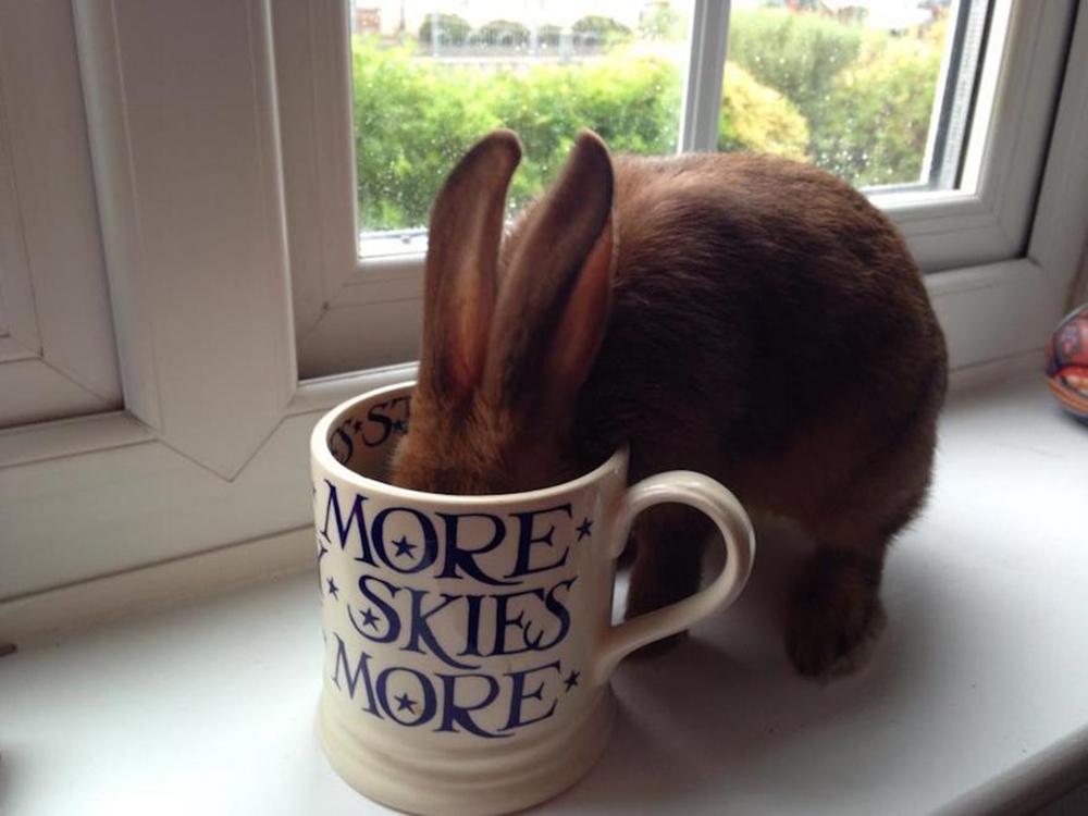 bunny drink coffee