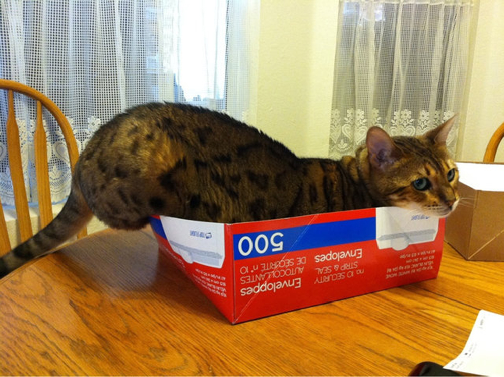 cat dont fit this box