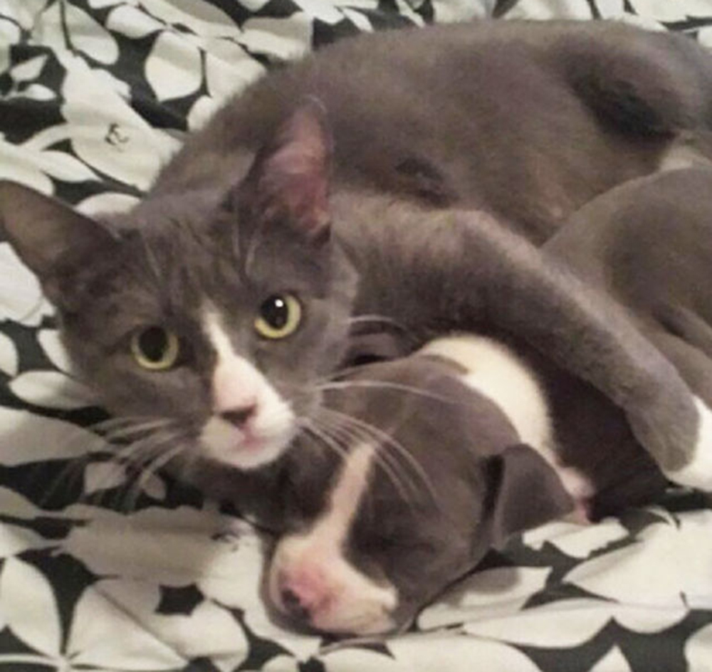 cat hugging the puppy
