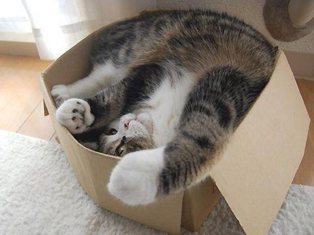 cat inside a box