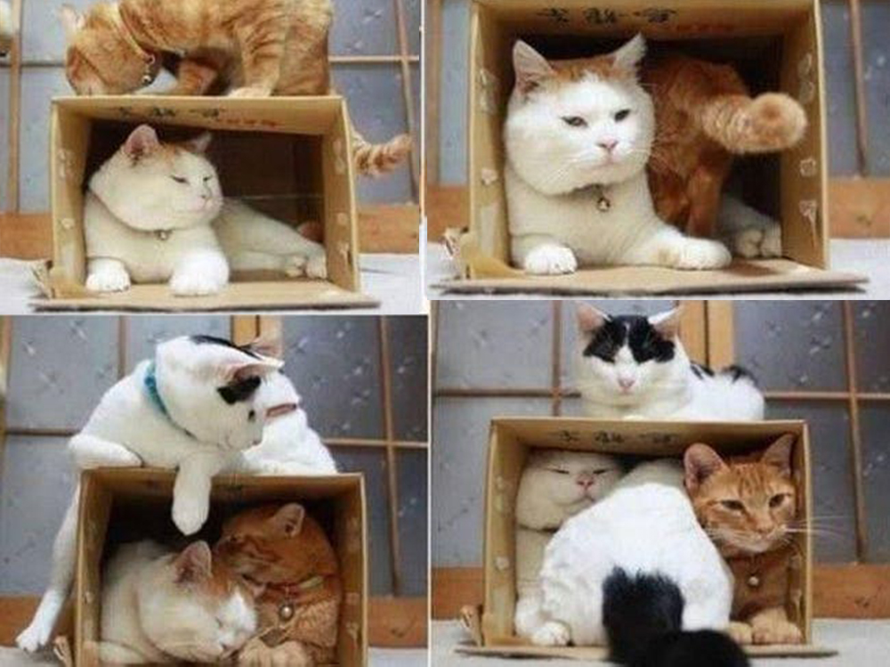 cat playing boxes