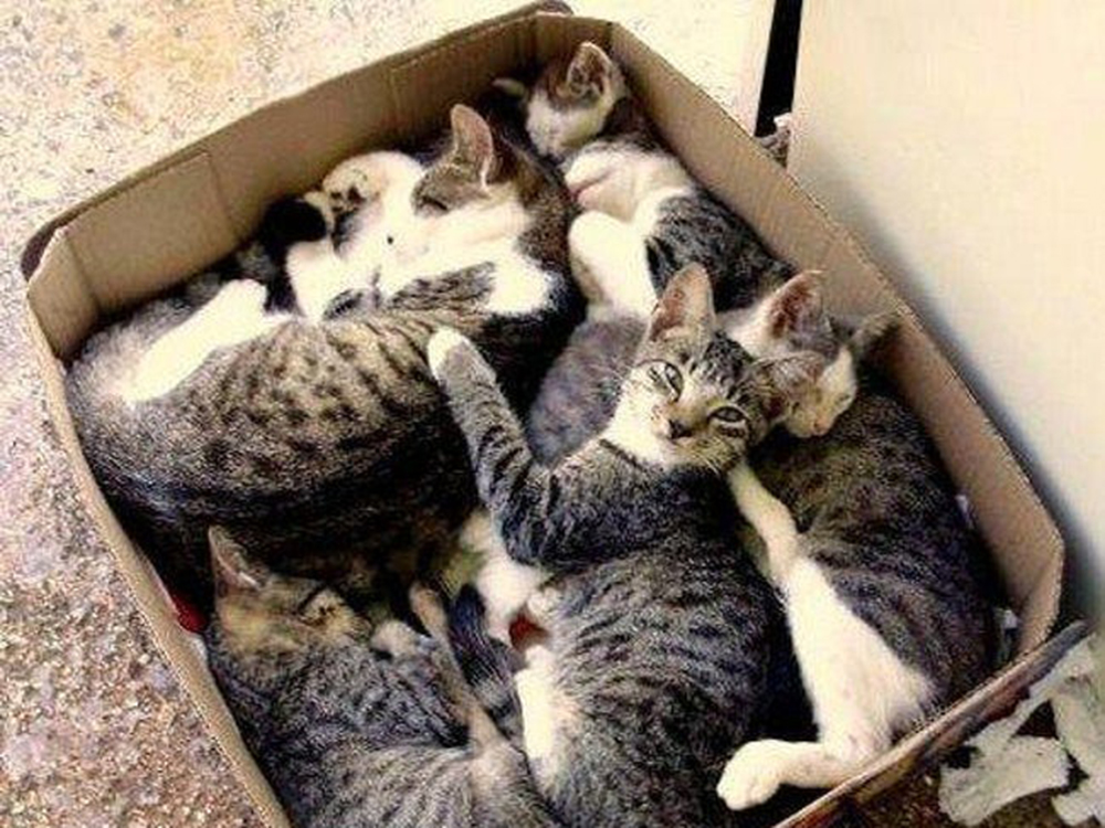 cats inside the box
