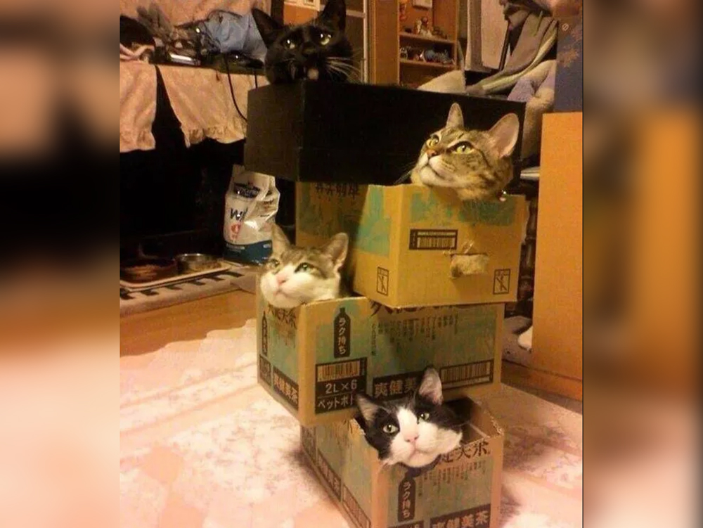 cats inside the boxes