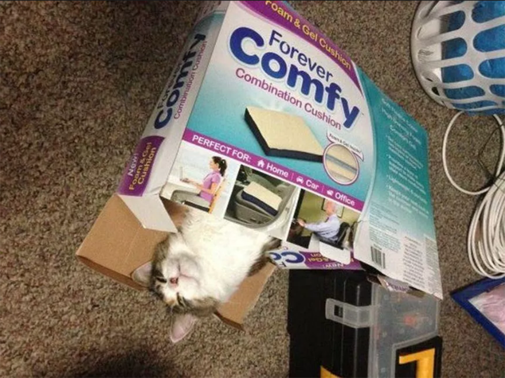 comfy box with cat
