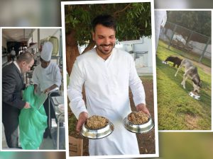 UAE Luxury Hotel Gives Away Brunch Leftovers to Dogs in Shelters