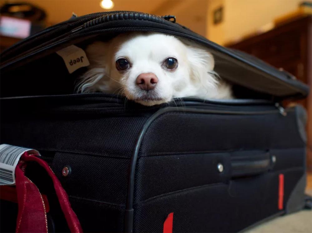 dog inside the bag