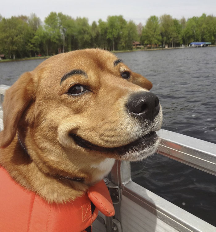 funny dog with eyebrows