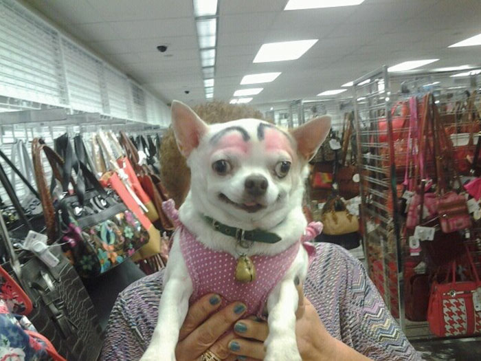 funny-dogs-with-pink eyebrows