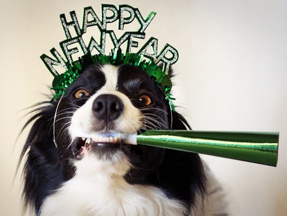happy-new-year-dog