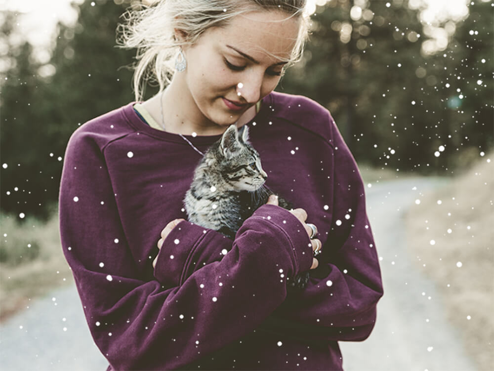 6 Tips to Keep Your Outdoor Cat Warm in Winter