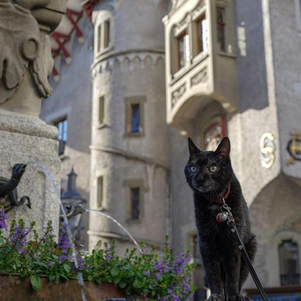 meet the adventurous cat noro