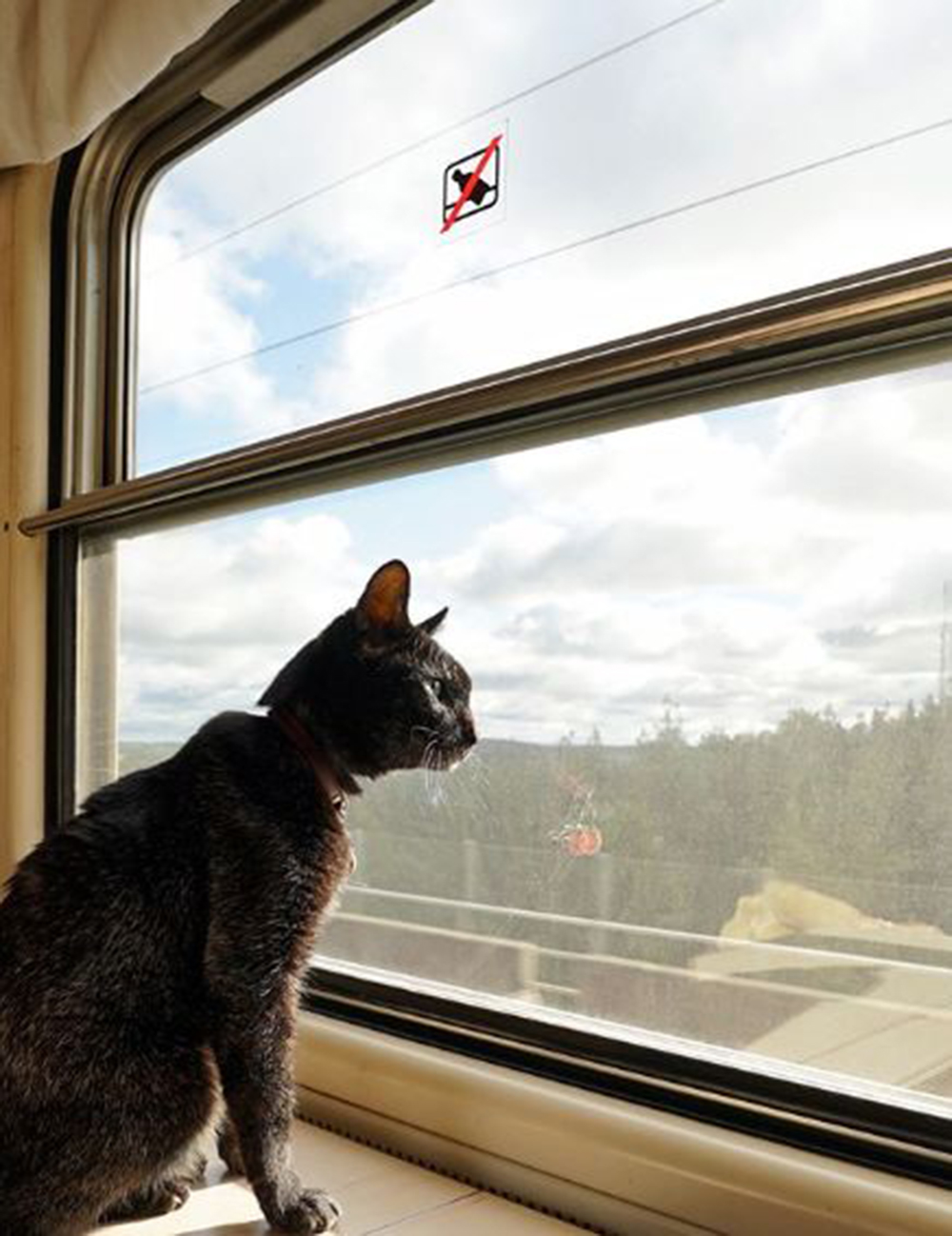 noro the cat at the window