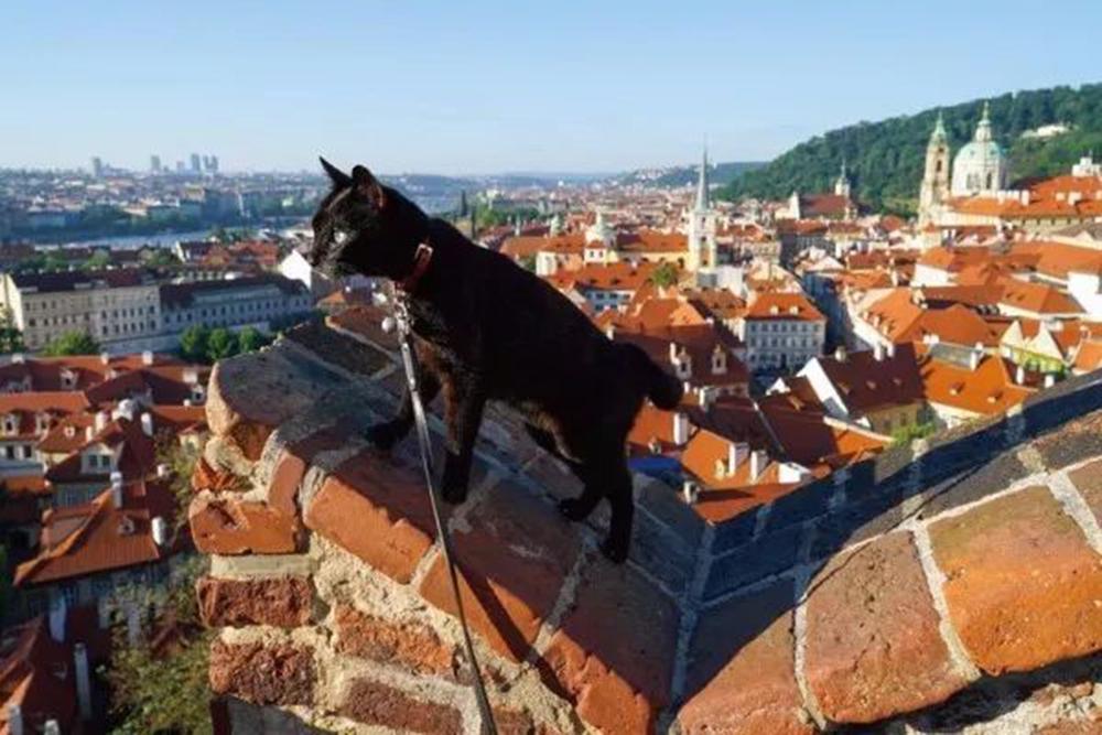 noro the cat in Croatia