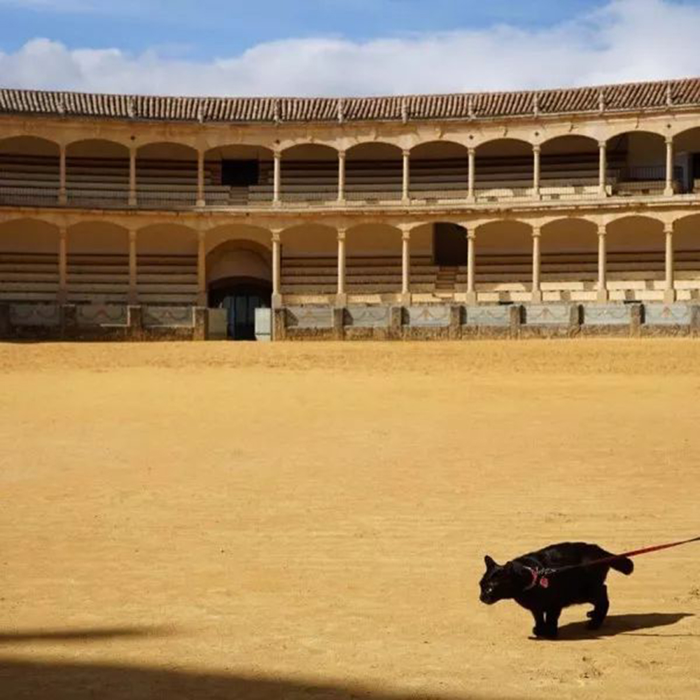 noro the cat in Spain