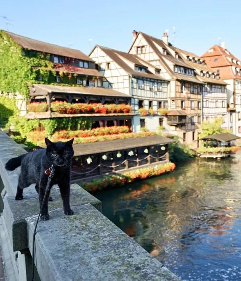 noro the cat in Strasbourg, France