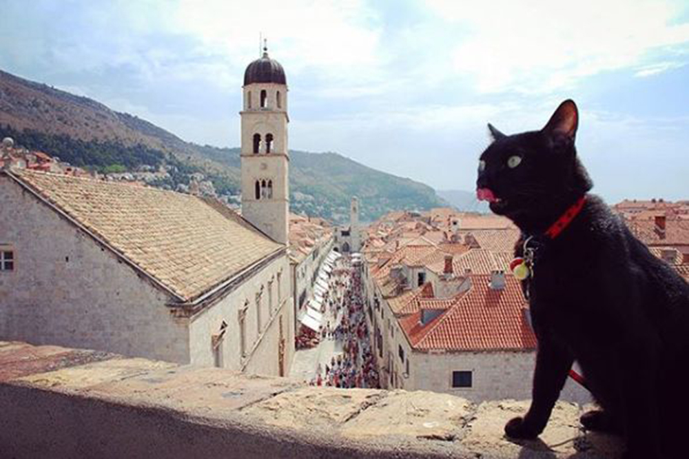 noro went to Dubrovnik