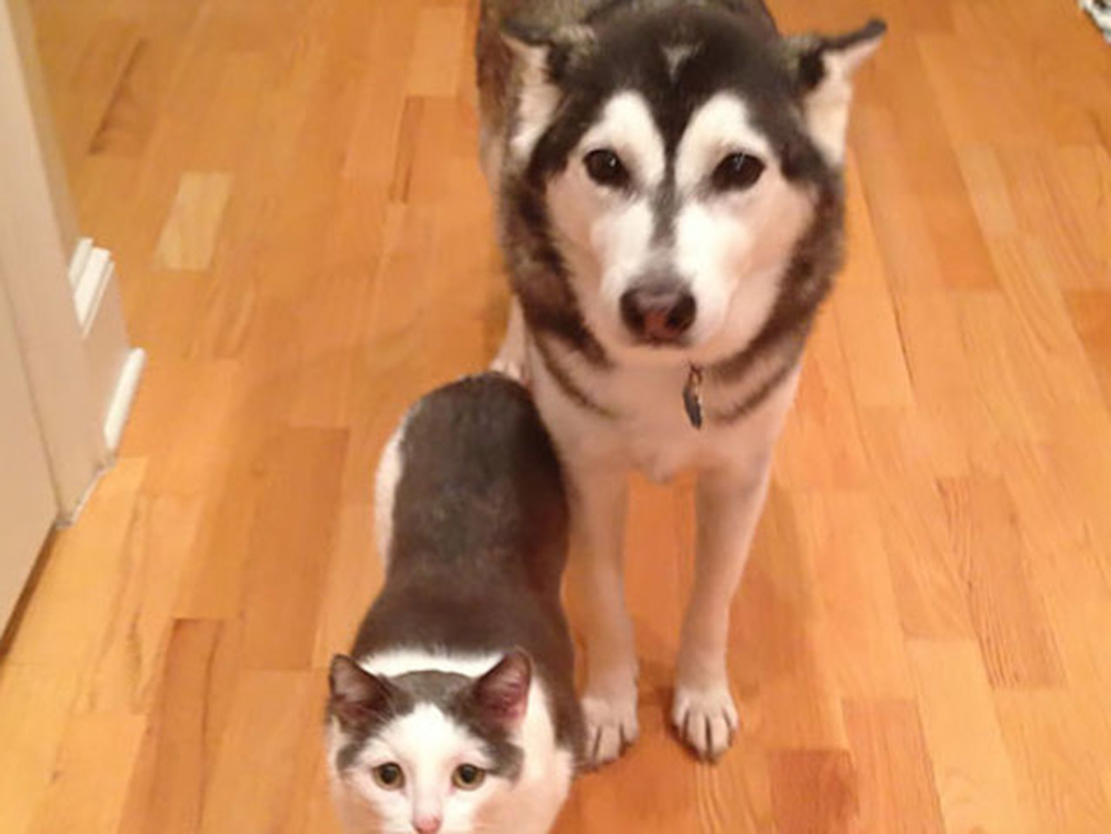 10 Furry Friends Finally Found Their Long Lost Brothers