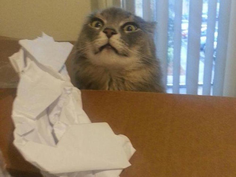 shocking cat