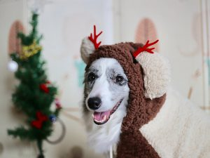 35-Points Socialisation Wish List for Your Dog