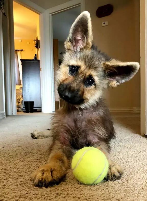small gsd