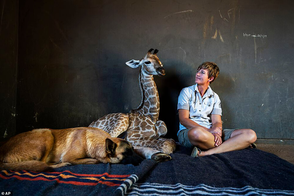 Baby Giraffe, girl and dog