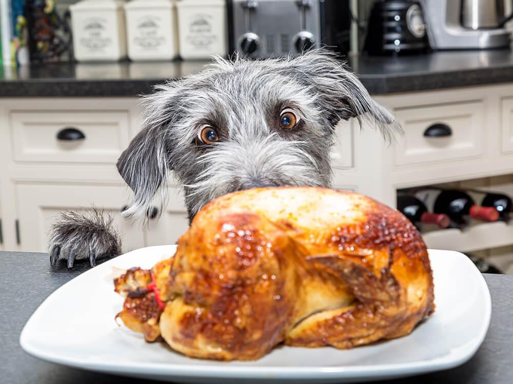 Dog Christmas dinner